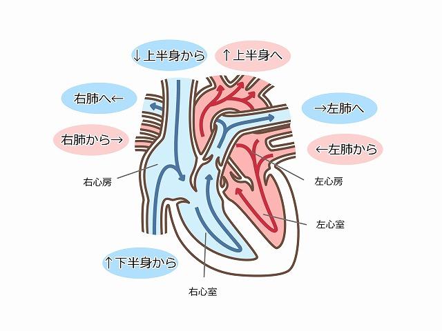 心臓弁膜症とは